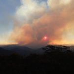 Bushfire damage: Wollangambe River and Mt Wilson